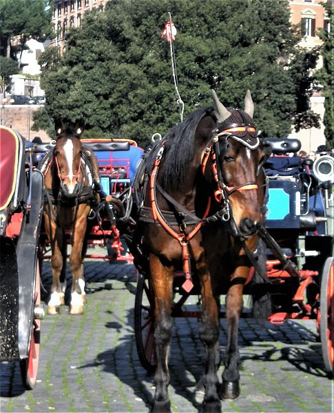 Botticelle, historical carriages pulled by horses used for tourists in Rome, Italy. Wikimedia image.