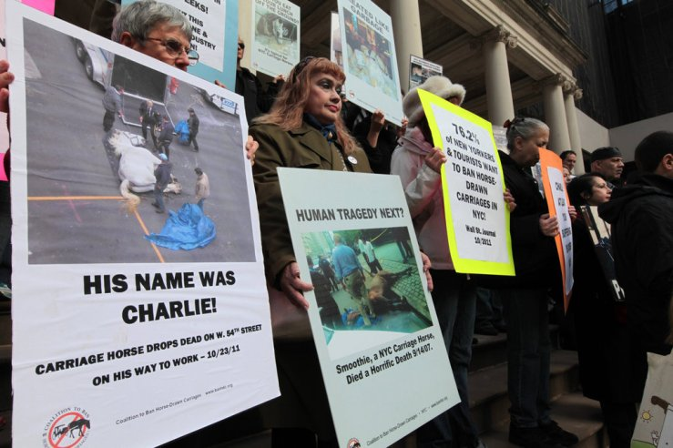 Protesters call for a ban on horse drawn carriages in New York City. BanHDC.org.