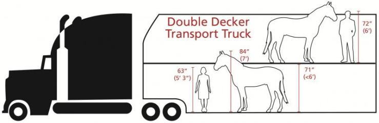 Illustration of a double decker truck used to transport cattle. You can see that they are not intended for horses. Source: AWI.