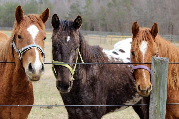 Meet and greet horses up for adoption at this weekend's 2 day AppyFest in Mechanicsville, Maryland.