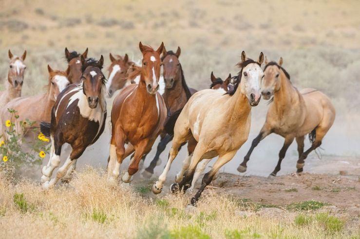 Wild horses of Utah. Unattributed image.