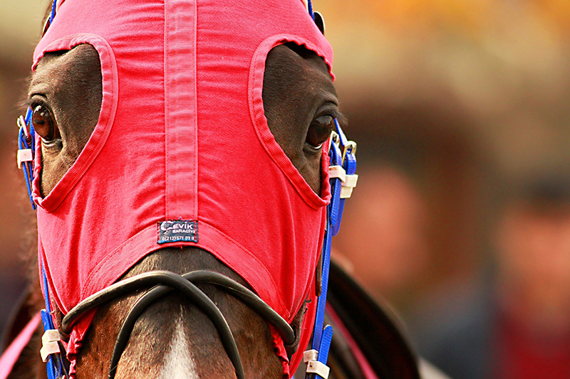 Racehorse in red hood. The Horse magazine online.