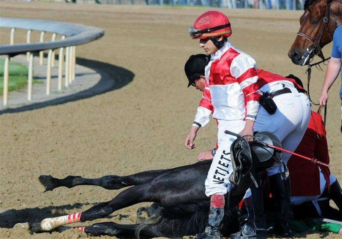 Eight Belles is euthanized on the track after crashing down on her chest when both of her front legs shattered following the finish of the 2008 Kentucky Derby.