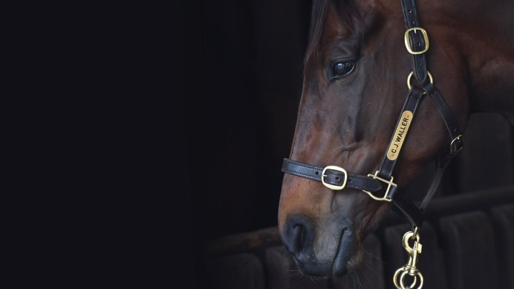 The great Australian race mare who won the Cox Plate a record four times.