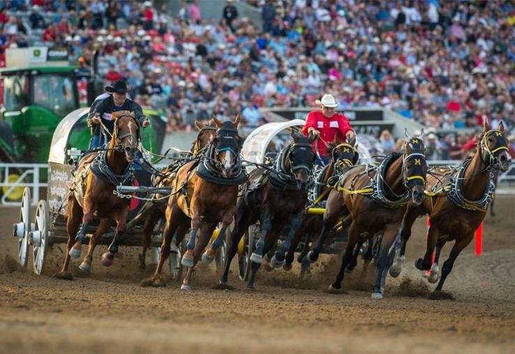 Calgary Stampede Chuckwagon Race Kills Second Horse