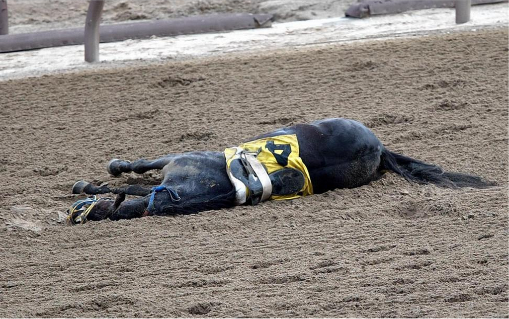 Dead racehorse. Source: Pinterest.