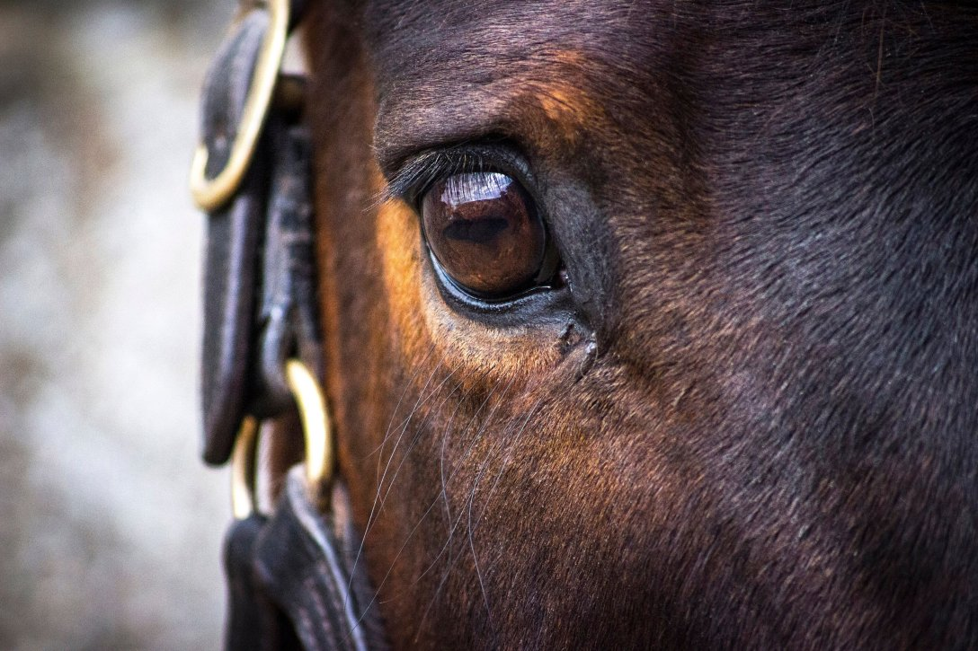 Thoroughbred Eye Photographic Print from Etsy.
