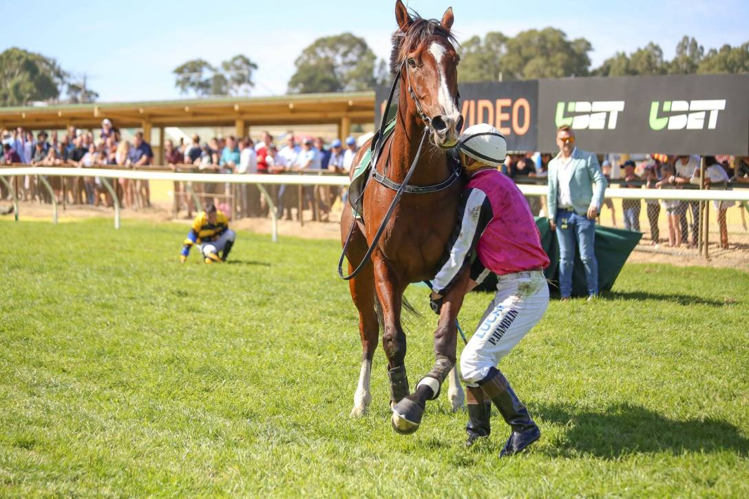 Jockey tries to hold an Australian steady up who has a badly fractured foreleg.