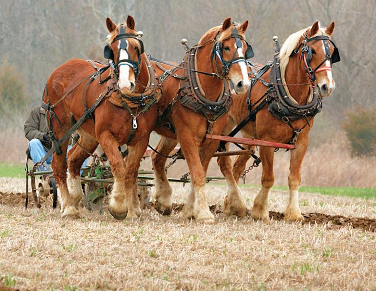"""Main image for """"A Country Built by Horse Power"""", at Horse Journals."""