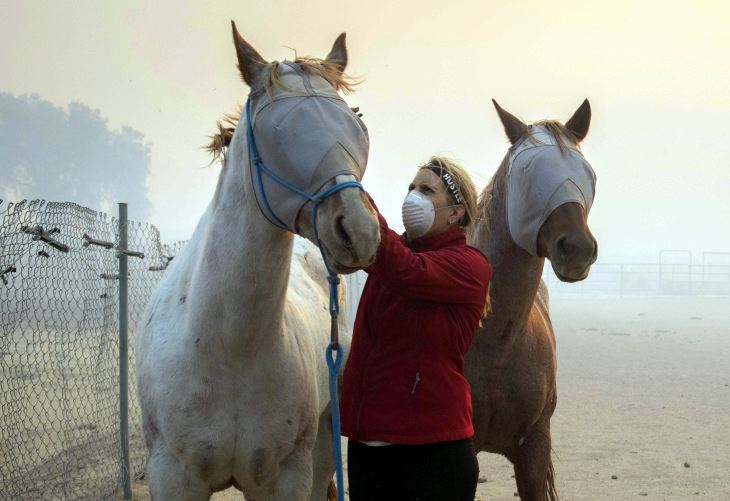 Volunteers help evacuate horses during the Easy Fire, Wednesday, Oct. 30, 2019, in Simi Valley, Calif. (Christian Monterrosa/AP)