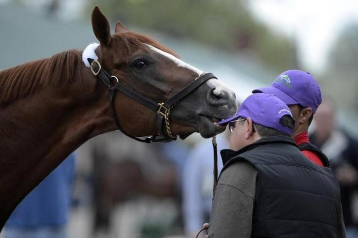 California Chrome prior to the Kentucky Derby.