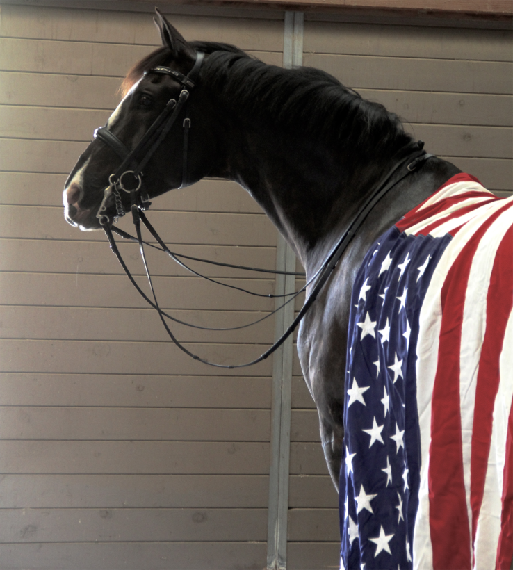 Horse wearing the Stars and Stripes.