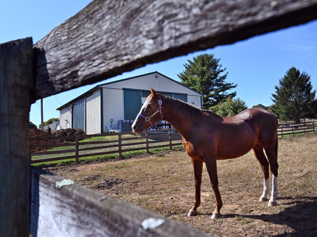 Florida horse owners warned to be cautious as horses continue to be stolen and slaughtered for the black market.