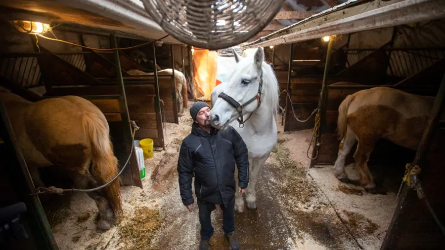 Luc Desparois rents the land where his stable is located, in Griffintown. He filed a court injunction Monday against Montreal's ban on horse-drawn carriages, which goes into effect on Jan. 1. (Ivanoh Demers/Radio-Canada)