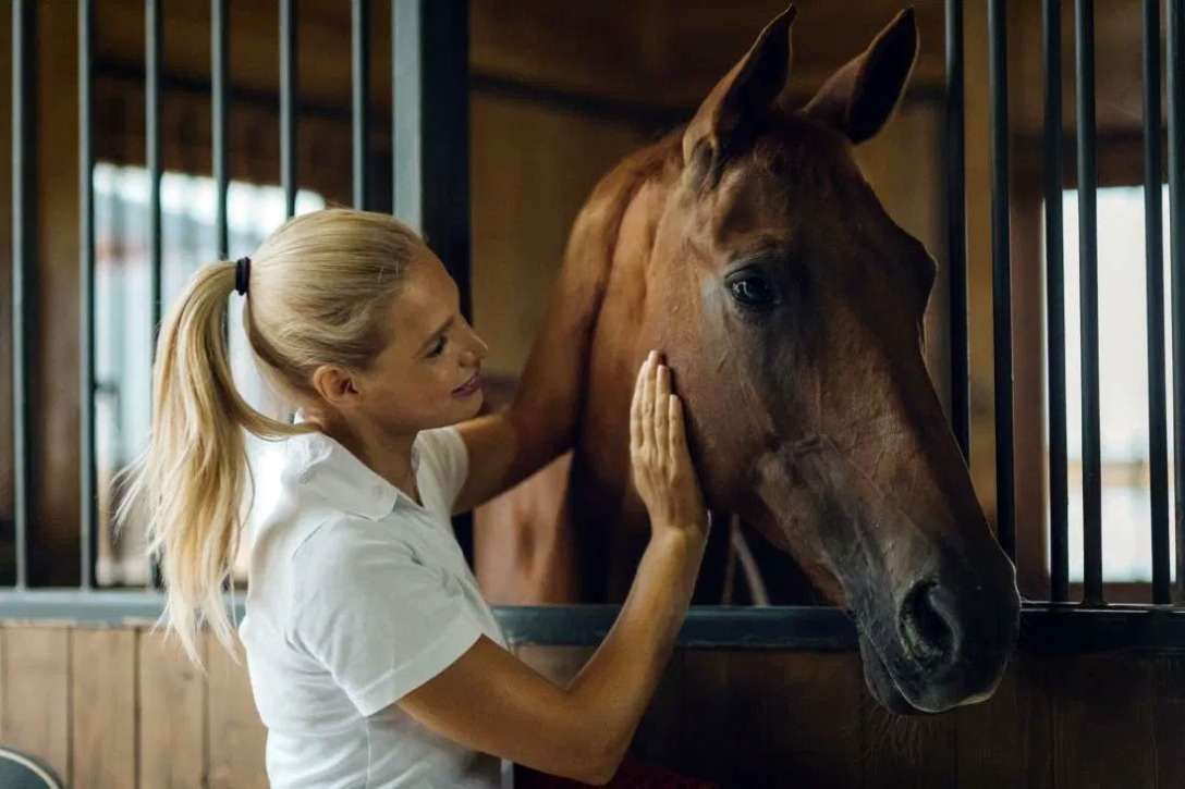 Image filed with How Horses Perceive and Respond to Human Emotion, by Medical News Today.