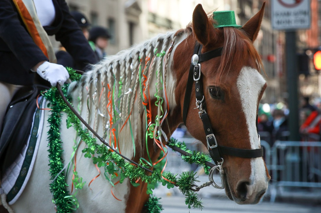 NEW YORK, NY — Members of the County Carlow Association ride horses as they march along 5th Avenue during the annual St. Patrick's Day parade, March 17, 2017 in New York City. The New York City St. Patrick's Day parade, dating back to 1762, is the world's largest St. Patrick's Day celebration. (Photo by Drew Angerer/Getty Images)