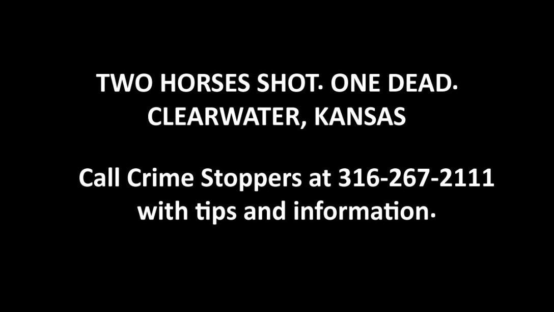 Featured image for shot horses in Kansas.