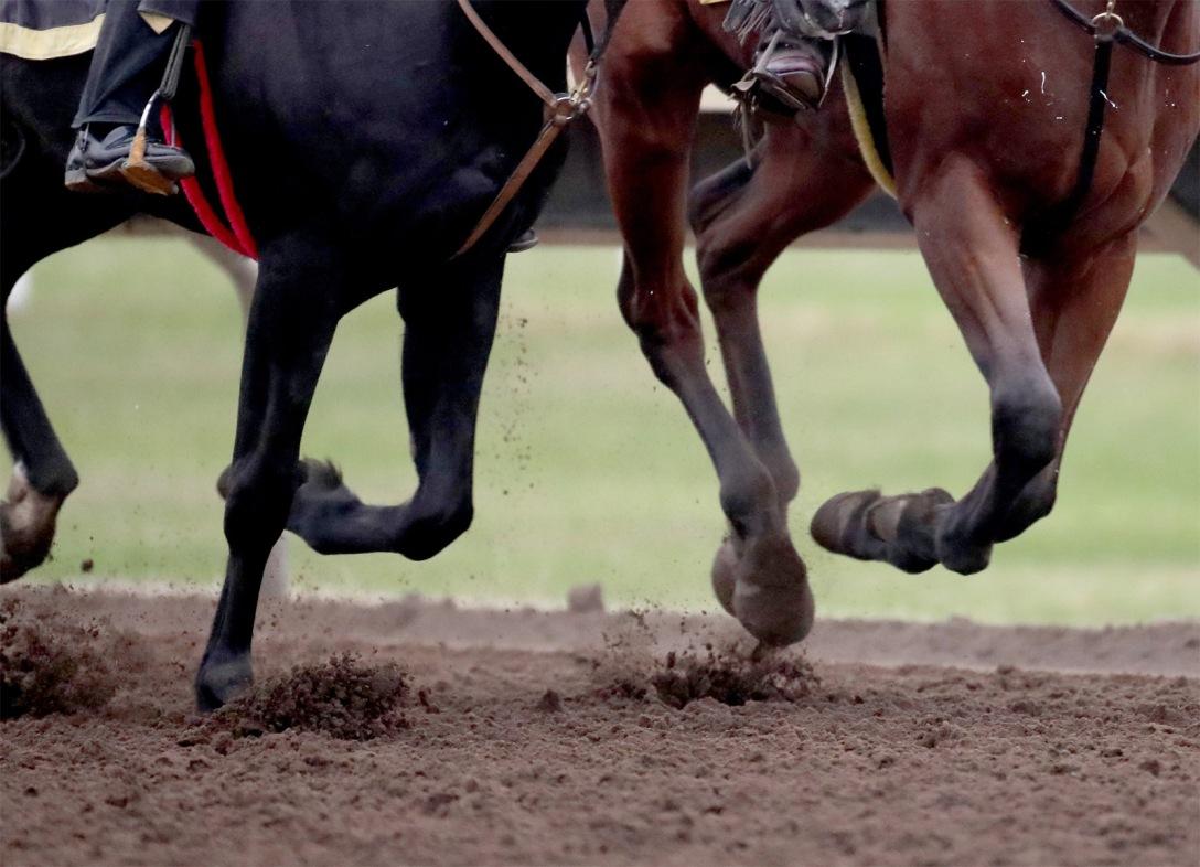 Racehorse train on a California track. By DAVID JOLES / STAR TRIBUNE.