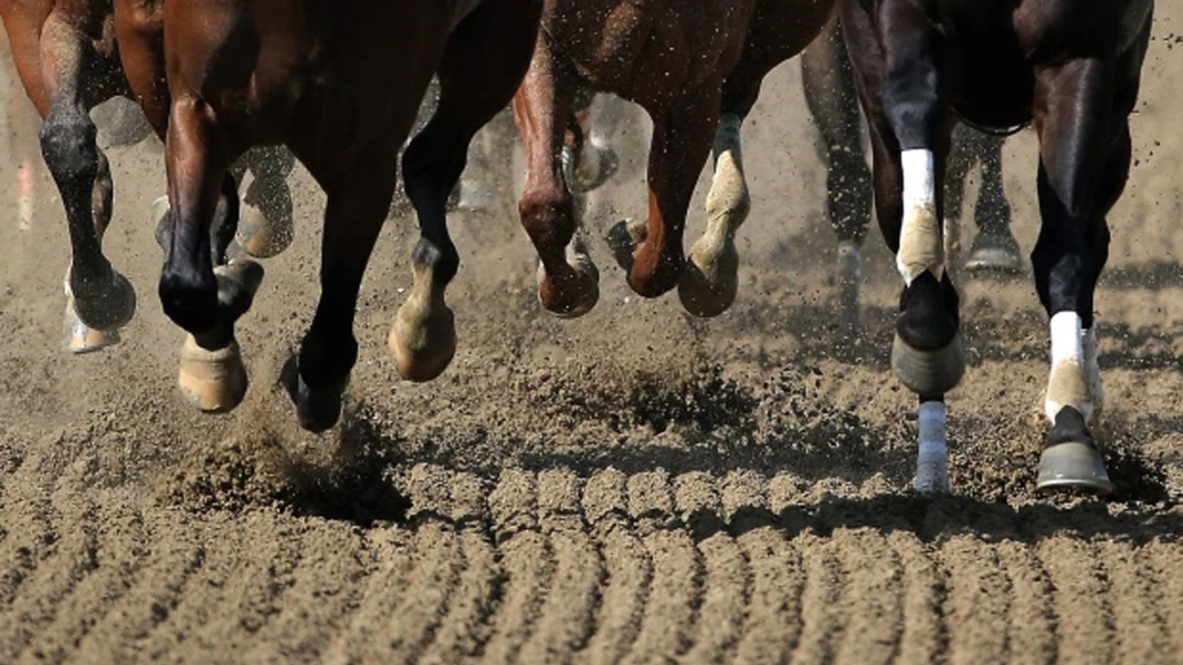 Galloping hooves on a racetrack. Photographer Unknown.