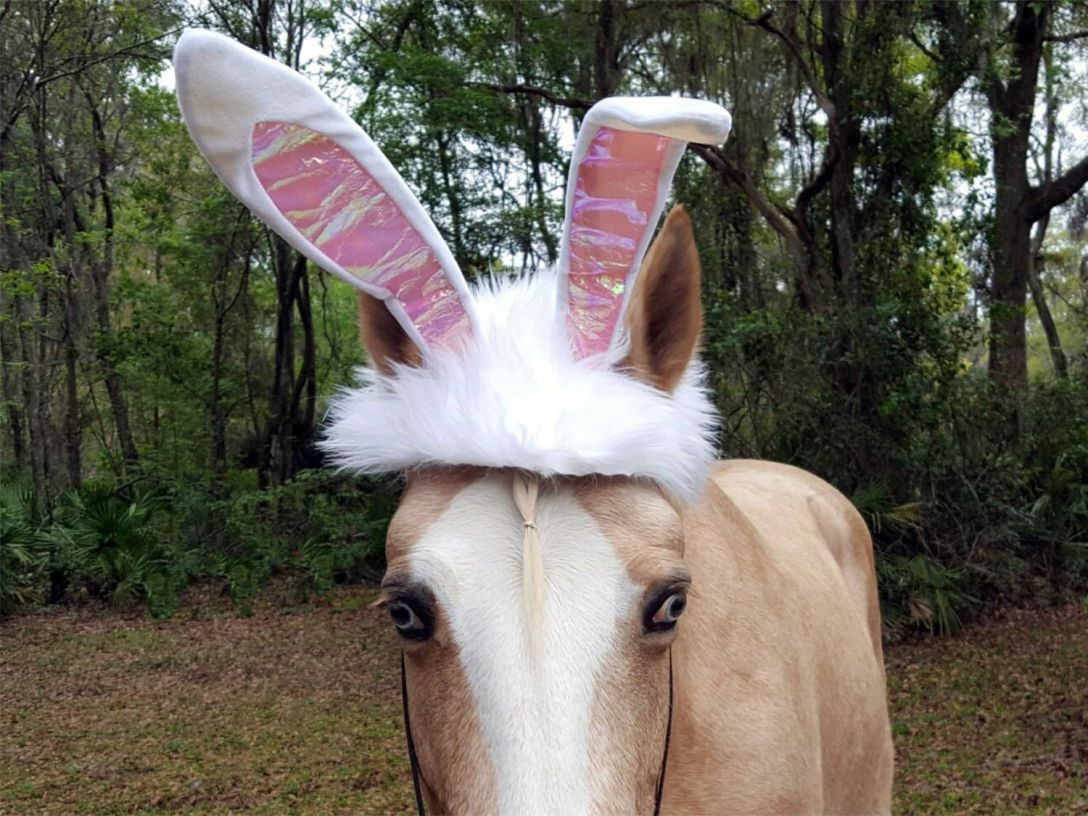 Horse in Easter Bunny ears.