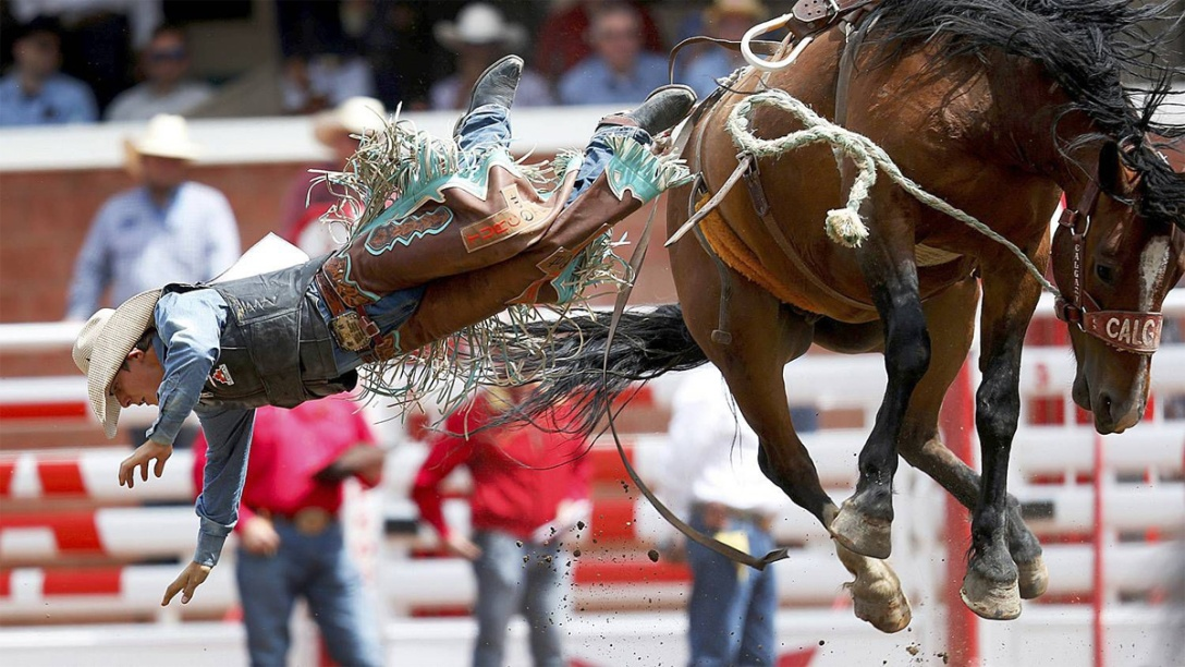Bucking bronco horse ejects cowboy. Globe & Mail. Calgary Stampede rodeo. 2015.