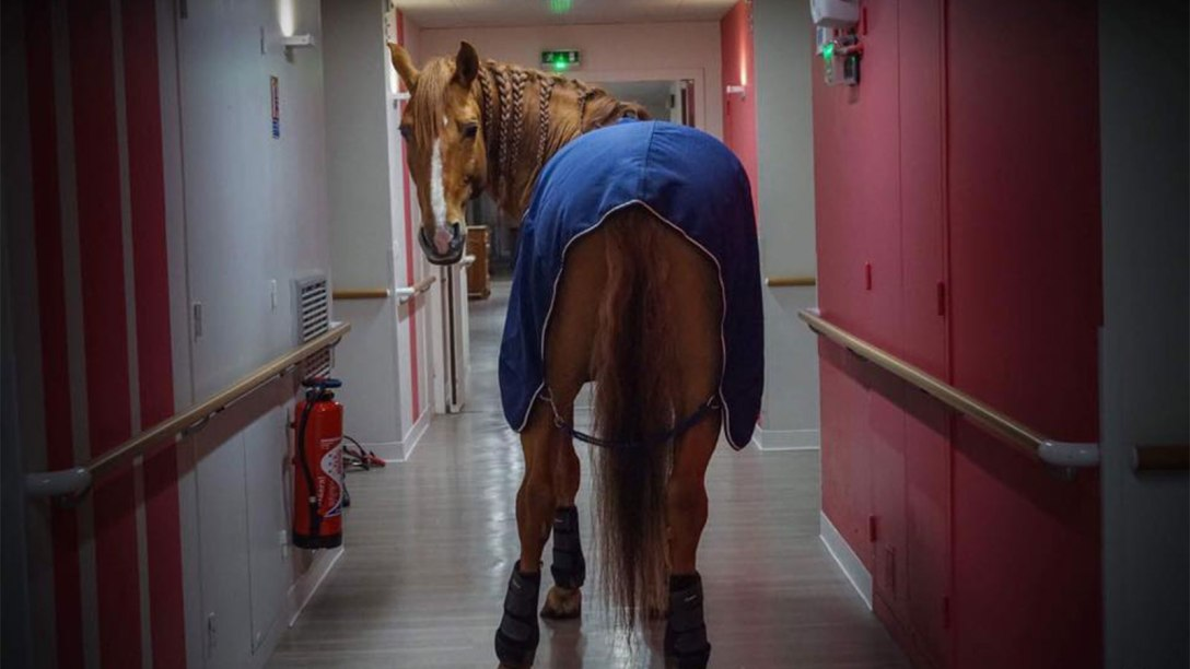 Peyo, dressed and ready to heal, at a hospital in France.