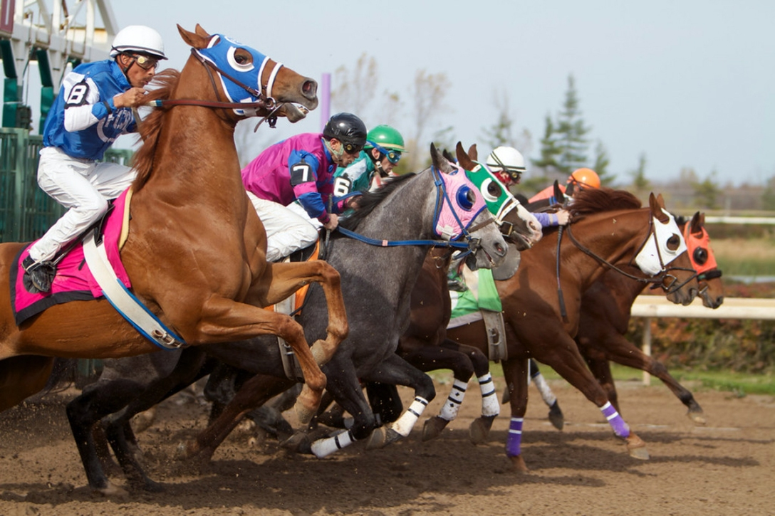 Quarter Horses jump out the starting gate. Photographer unknown.