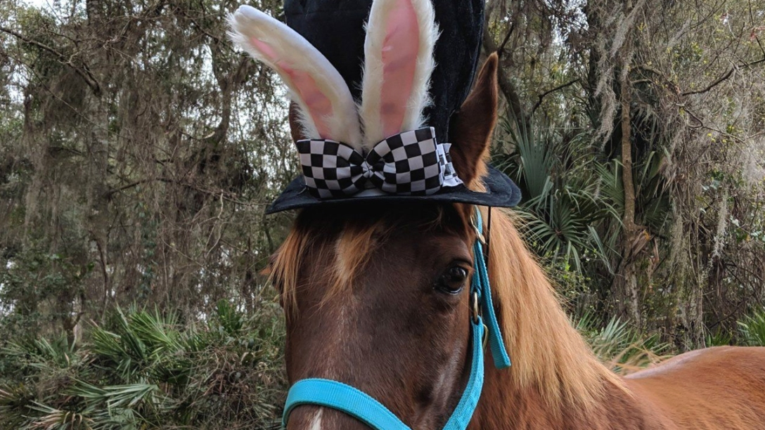 Horse wearing top hat and bunny ears. Pinterest.