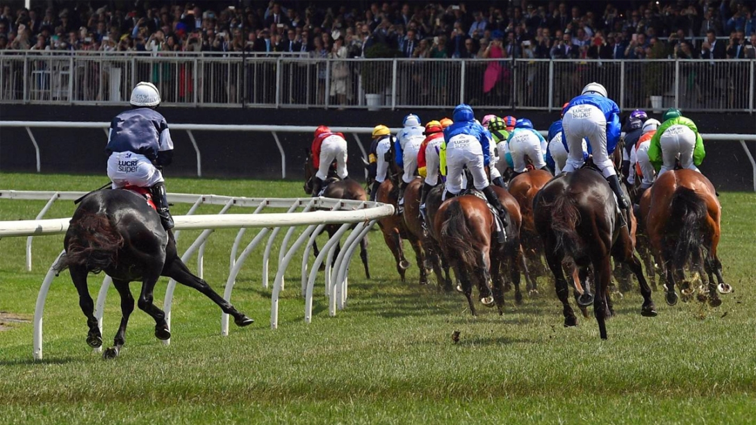 Racehorses take a turn on the grass in New Zealand