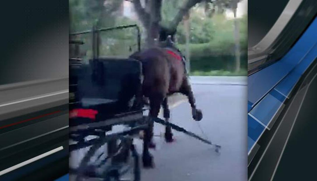 Charleston's Live 5 News image of Ervin the carriage who ran away, injured and later euthanized.