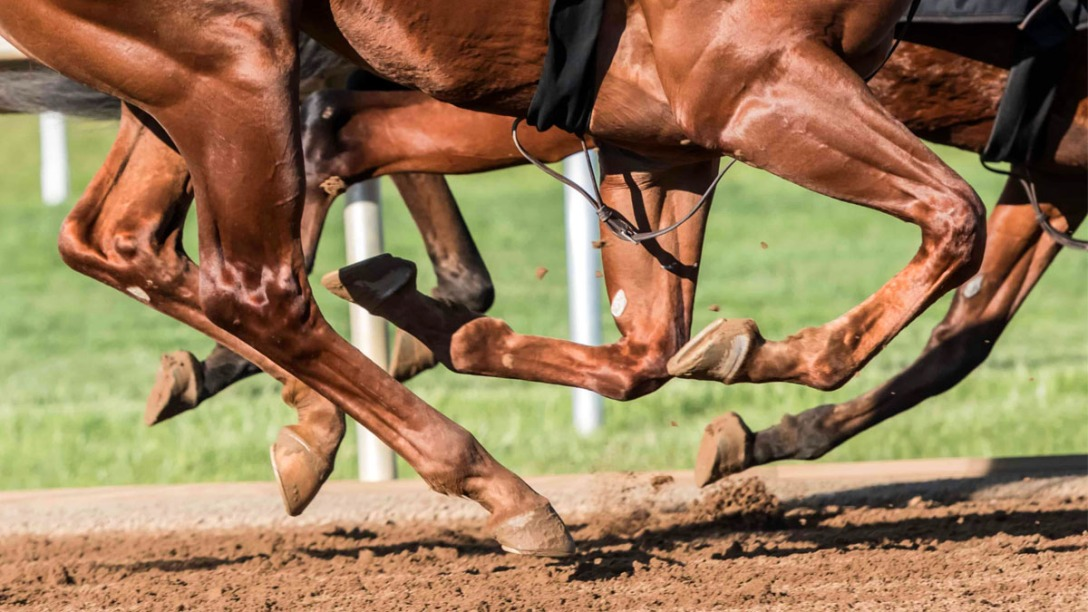 Closeup of Thoroughbred racehorse's hooves galloping on a direct track. Photographer unknown.