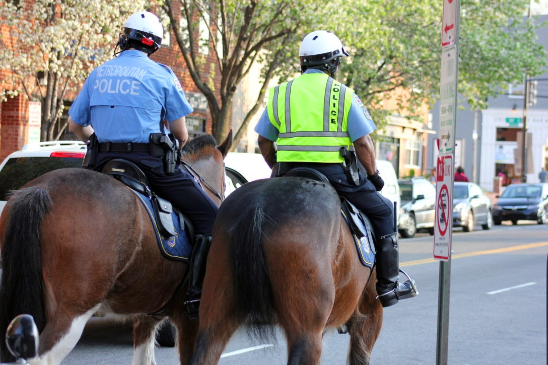 D.C. mounted police horses. Image: DCist.com.
