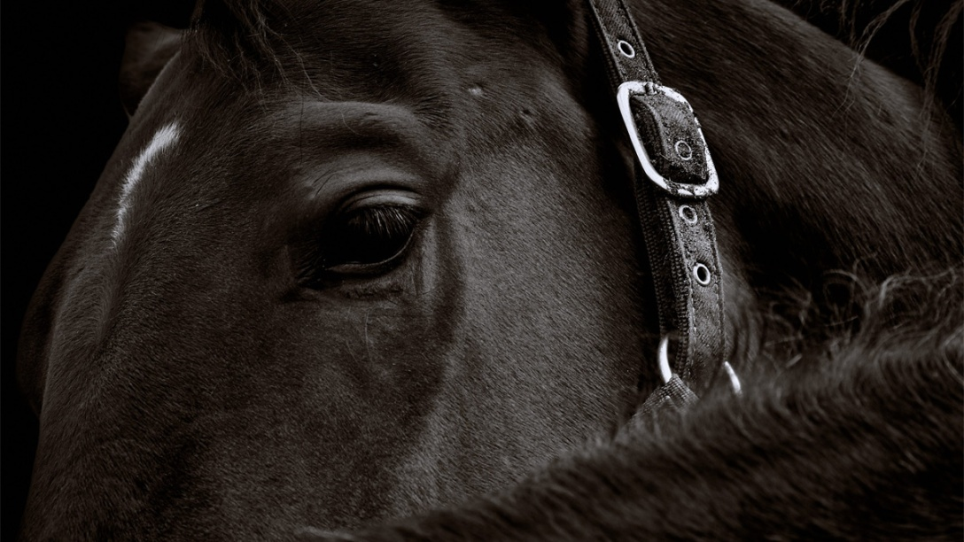 Horse. France. Close Up. Photographer unknown.