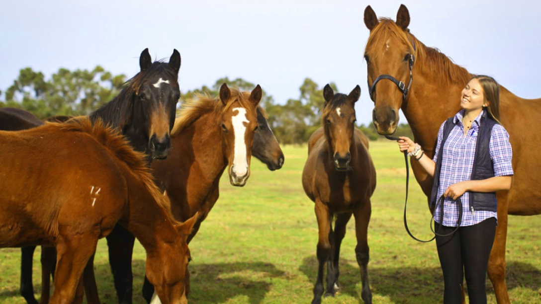 RWWA. Retired racehorse program for off the track Thoroughbreds, Western Australia.